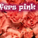 risen_header_pinkcarnations